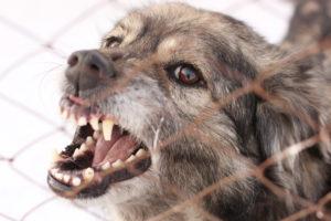 Dog bite injury lawyer Phoenix, AZ
